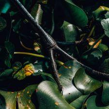 """Four Leaf Footsie"" - Megan Johnson"