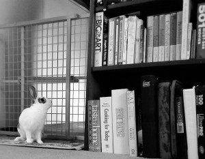 bunny browsing books