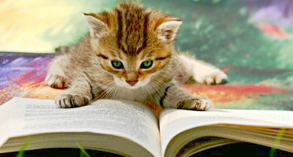 Cat Caught Reading