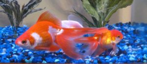 katiesfish1