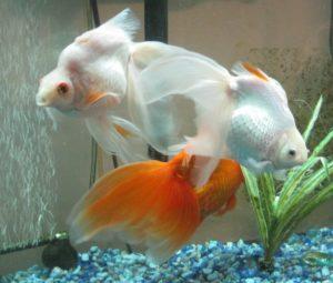 katiesfish2