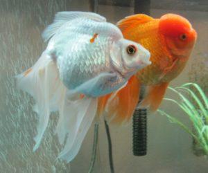 katiesfish3
