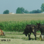 Amish Field Work