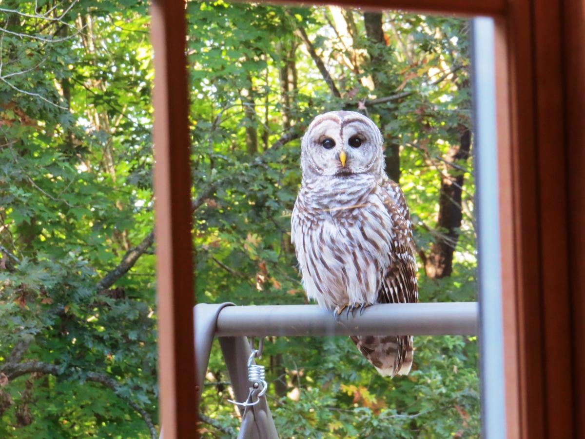Owl on playset