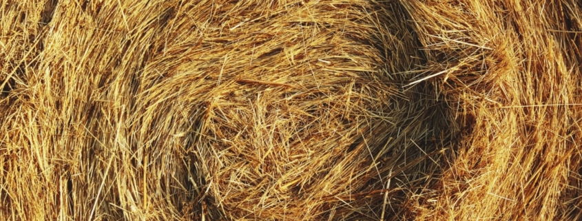 Photograph of a haystack