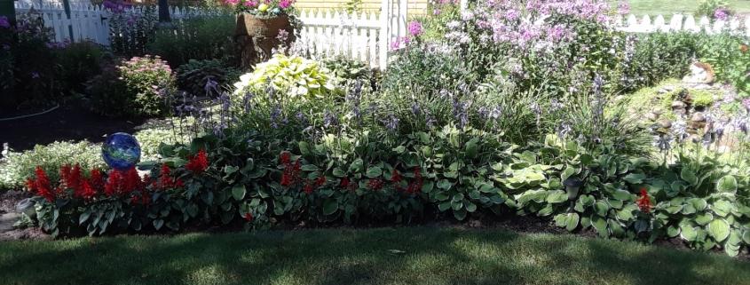 Photograph of Author's Garden
