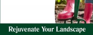 Rejuvenate Your Landscape