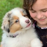 Friday, the Australian Shepherd Puppy
