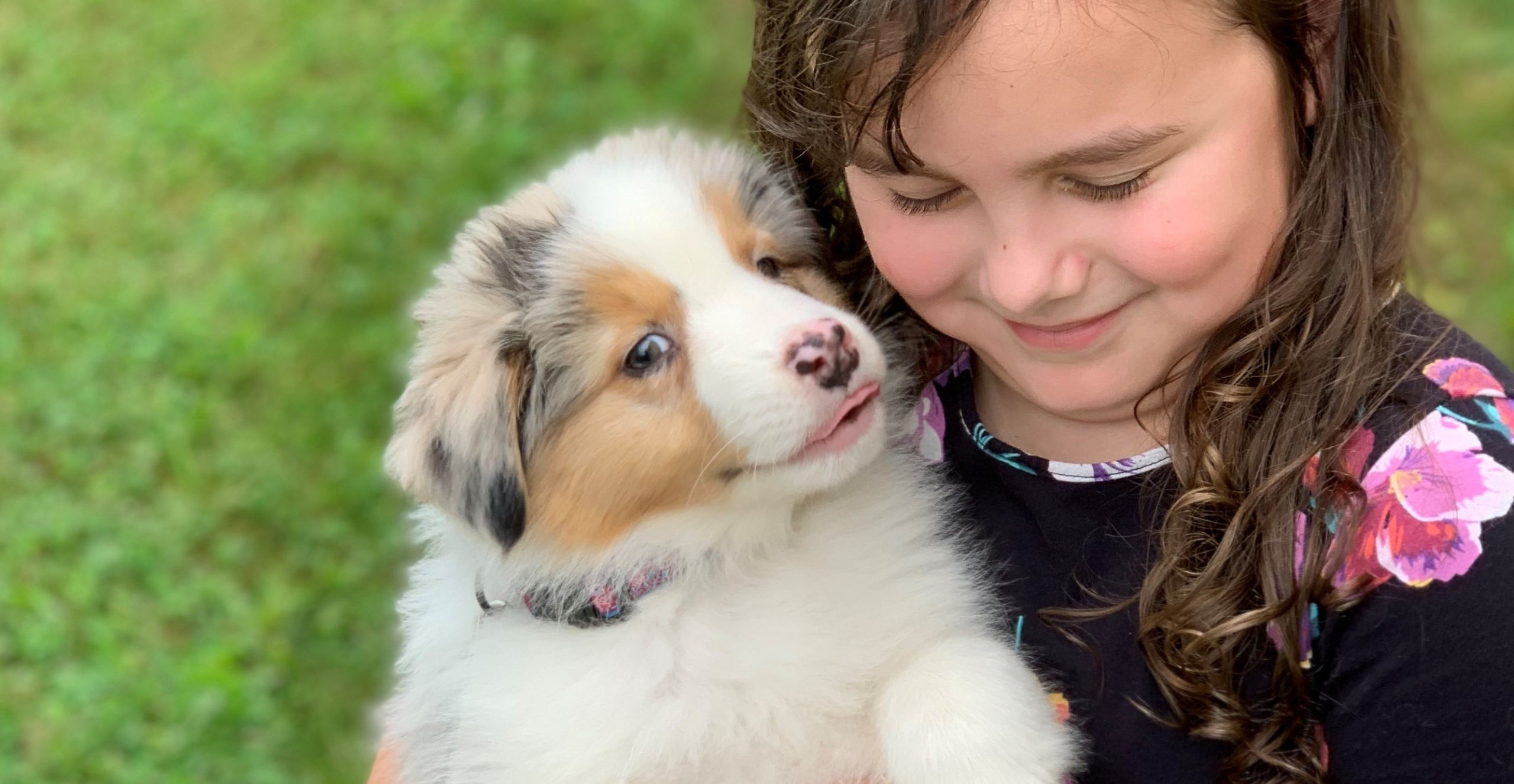 Friday, the Australian Shepherd Puppy